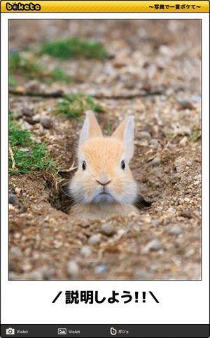 ボケて 最新ボケランキング 殿堂傑作ネタアーカイブ Bokete Naver まとめ Cute Baby Animals Animals Baby Animals