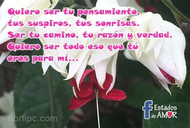 Palabras De Amor Para Actualizar Mi Estado De Facebook Amor Palabras De Amor Imagenes De Enamorados