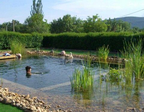 Piscinas naturales construcci n piscina natural sistemas for Albercas naturales