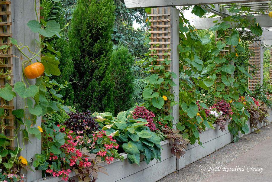 Edible landscape - love the trellis with sugar pumpkins ...