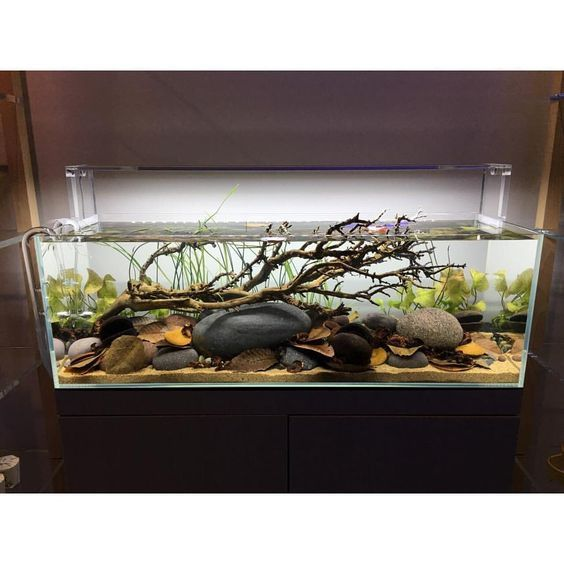 Home Aquarium Design Ideas: 42 Stunning Aquarium Design Ideas For Indoor Decorations