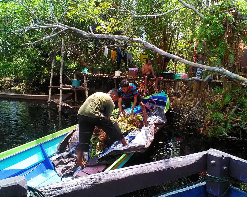 Indonesia Indonesian rainforest, Endangered wildlife, Borneo