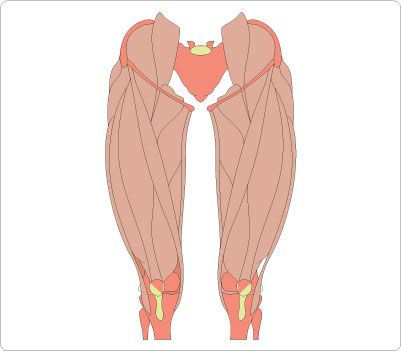 leg muscles clip art human body clip art pinterest clip art rh pinterest com muscle clipart black and white muscle clipart free