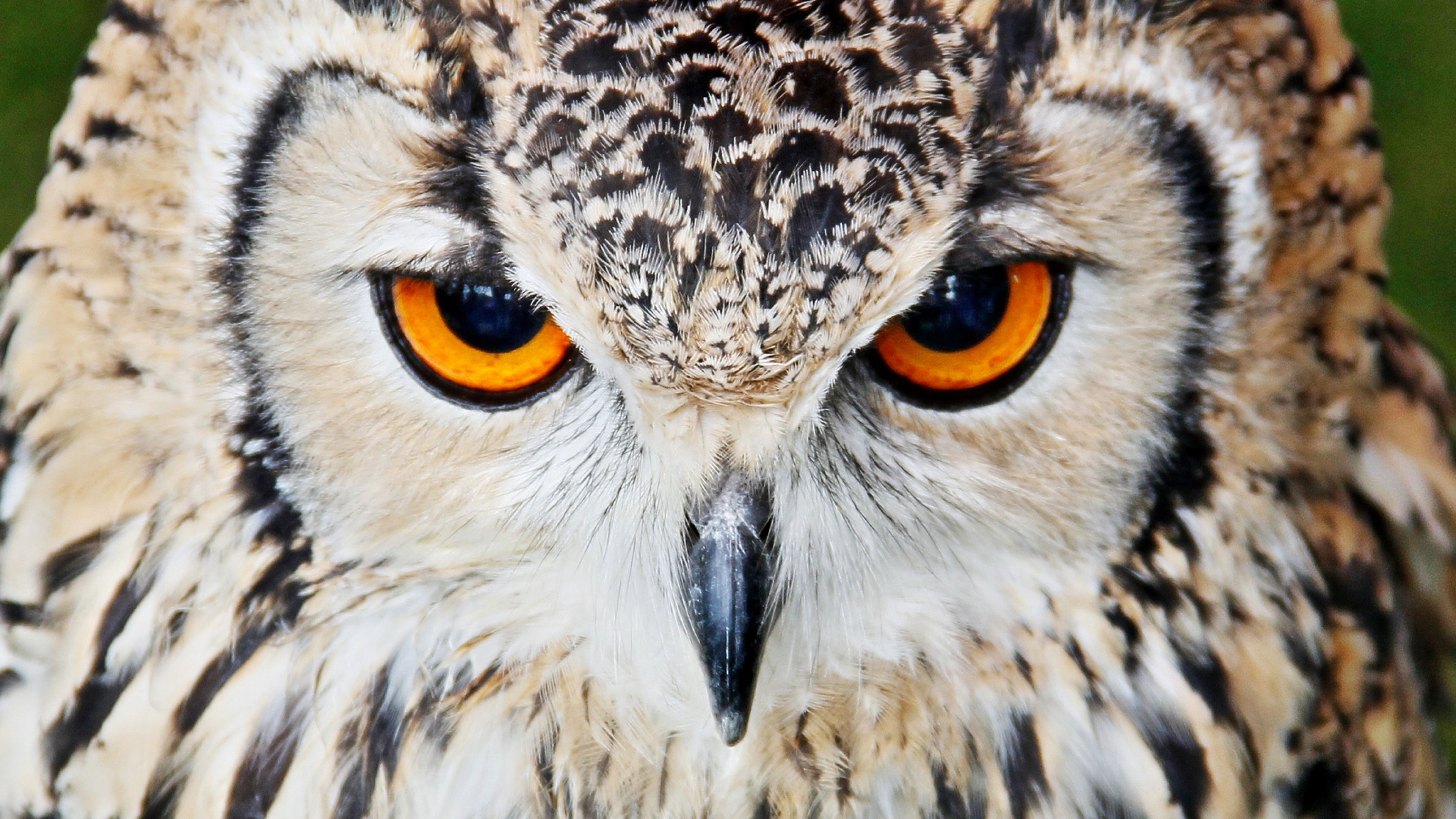 Download Wallpaper 3840x2160 Owl Beak Eyes Close Up 4k Ultra Hd Hd Background Pinturas A Oleo Abstratas Pinturas A Oleo Fotos