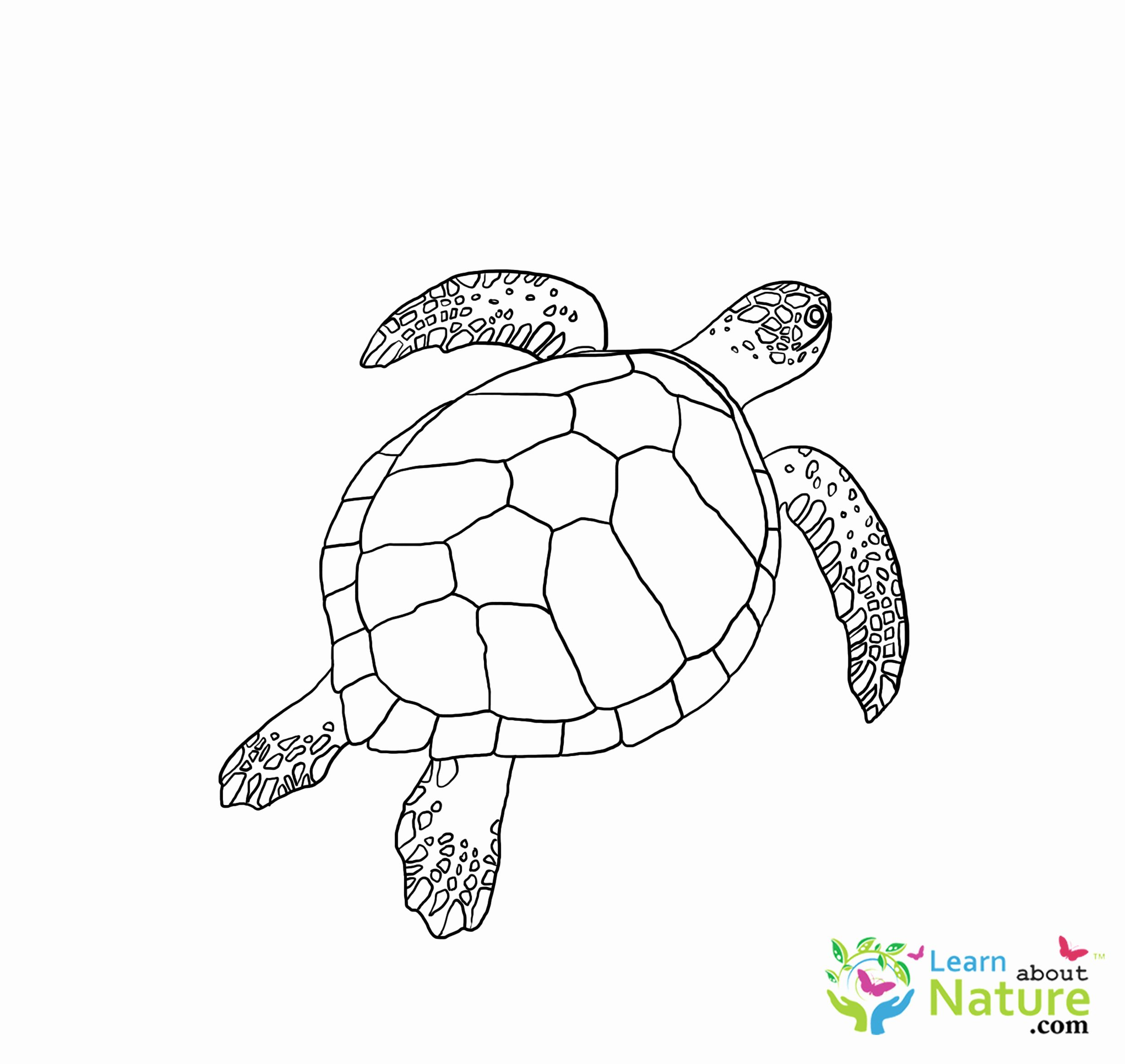 Pond Animals Coloring Pages Unique Turtles Coloring Page