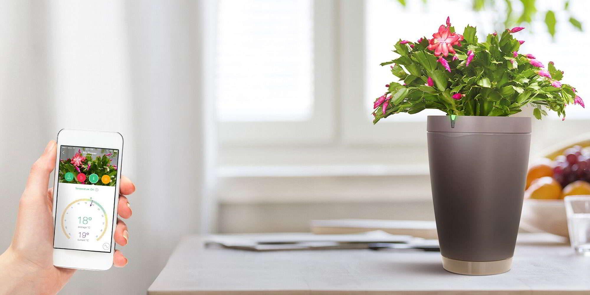 Parrot Pot Smarter Blumen Sitter Blumentopf Pflanzen Zimmerpflanzen