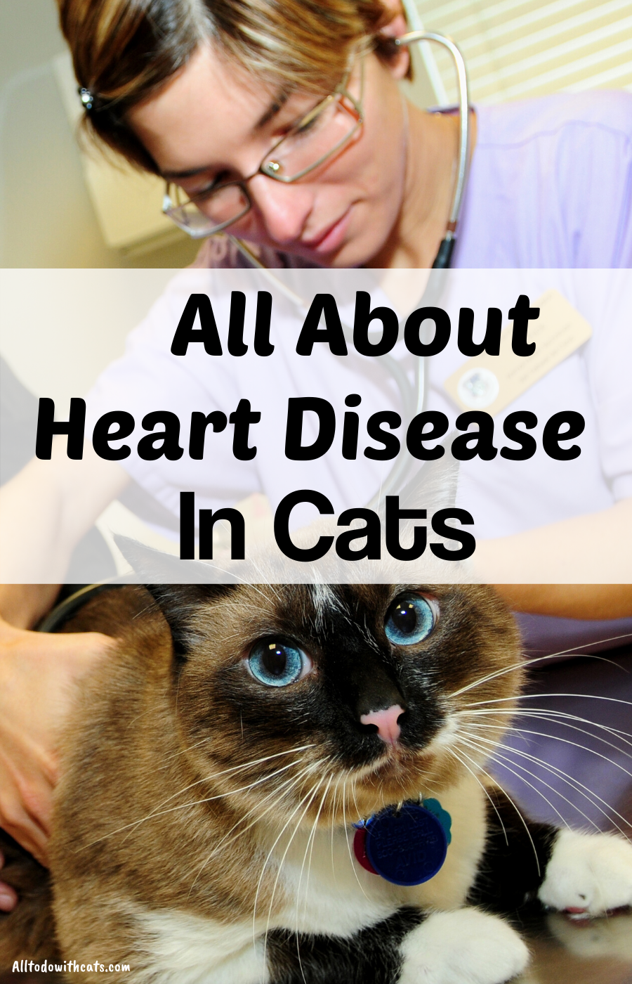 What Are The Symptoms Of Heart Disease In Cats? Heart