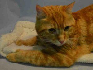 Summer A1037716 Cat Adoption Kitten Adoption Cats