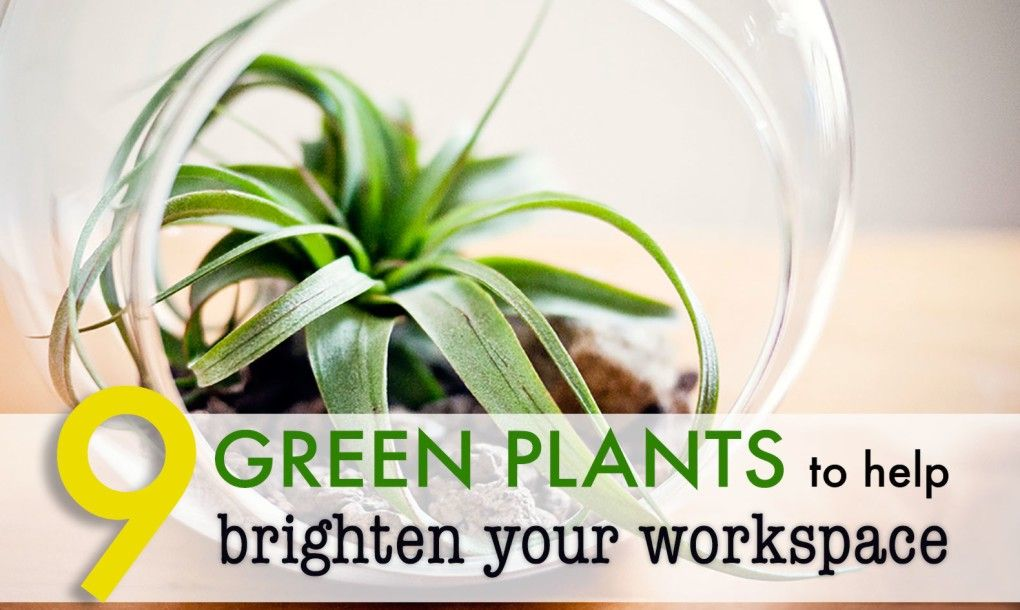 office cubicle plants. 9 Low-maintenance Plants For The Office Cubicle