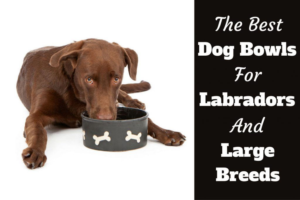 Best Dog Bowls For Labradors And Other Large Dogs With Images