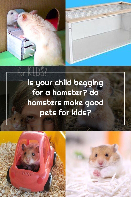 Pin Su Hamsters