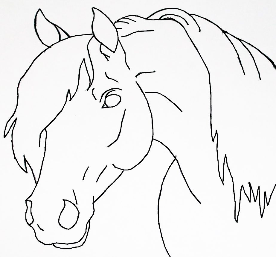 Easy How To Draw A Horse Head Step By Step  Yahoo Image Search Results