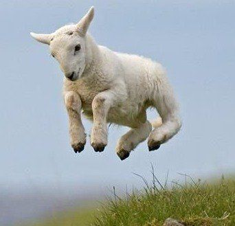 One Of The Best Things About Spring In England Leaping Lambs Spring Animals Baby Animals Pictures Animals
