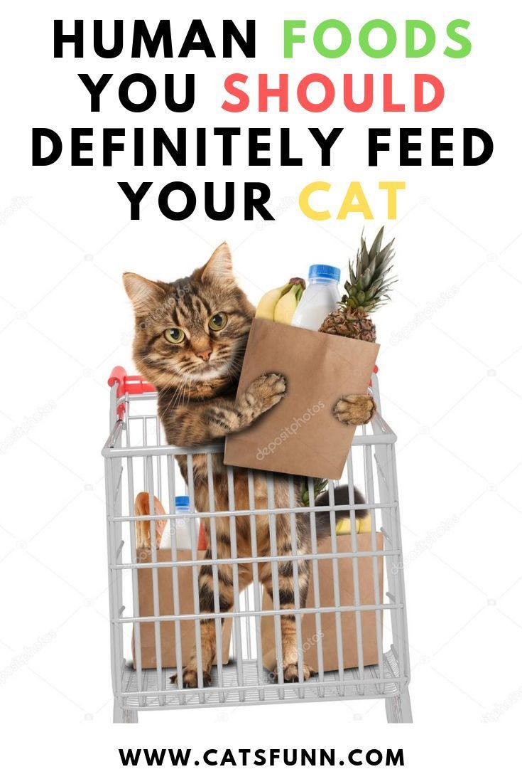 Searching For A Healthy Snack For Your Cat Fortunately You Dont Have To Look Much Further Than Your Own Pantry For Some Cat Safe Foods Katzen Haustiere Snack
