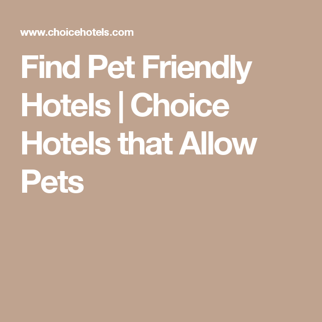 Find Pet Friendly Hotels Choice That Allow Pets