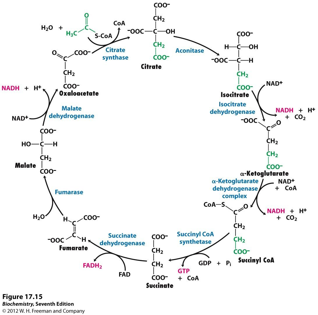 Kevin Ahern S Biochemistry Bb 451 551 At Oregon State