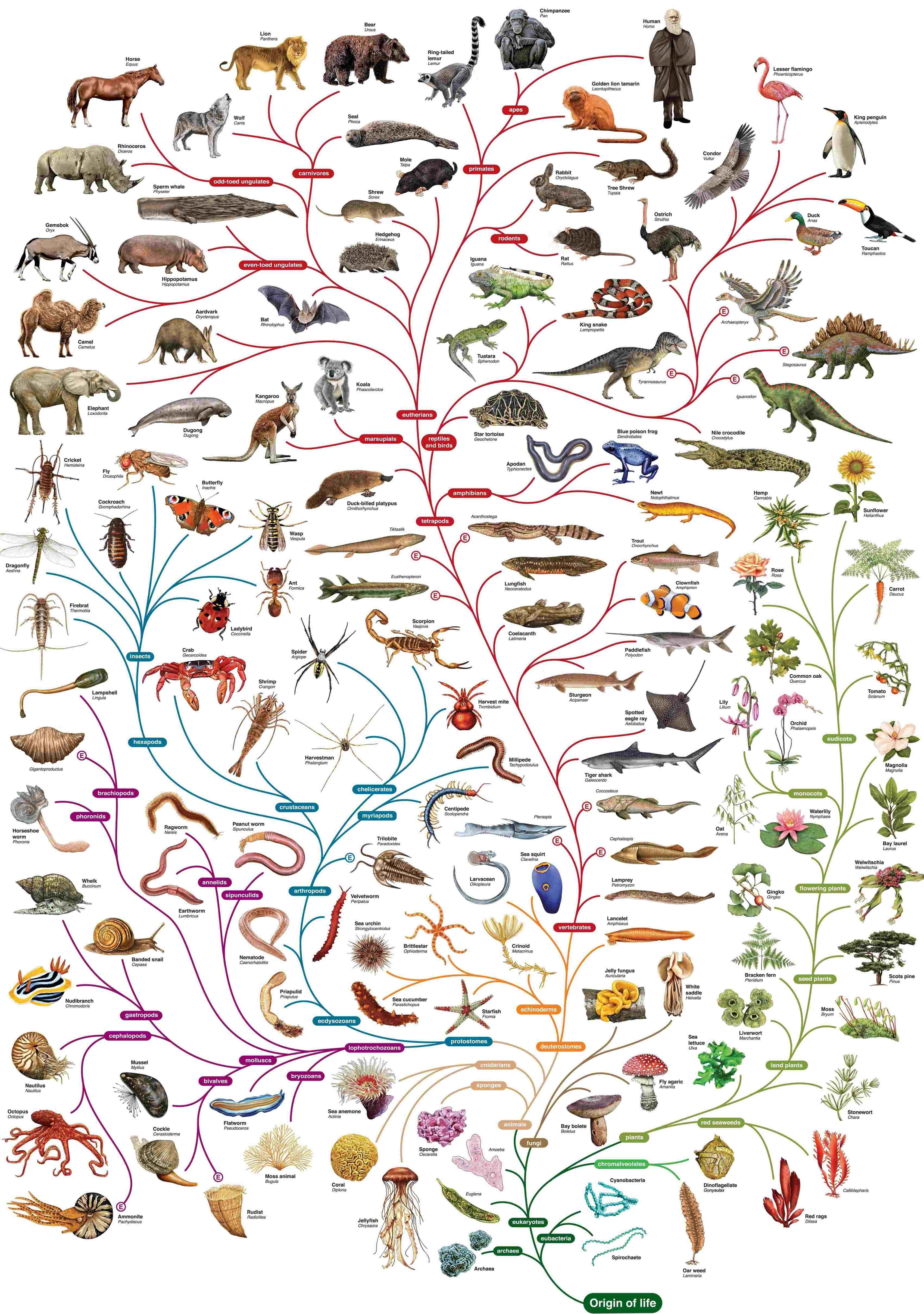 Completisimo Mural De La Evolucion Genial En Pdf Fraccionado En El Enlace Phylogenetic Tree Darwin Tree Of Life Science Biology