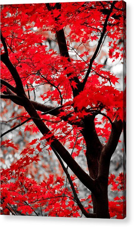 Last Fall Colors Acrylic Print by Alex Rios