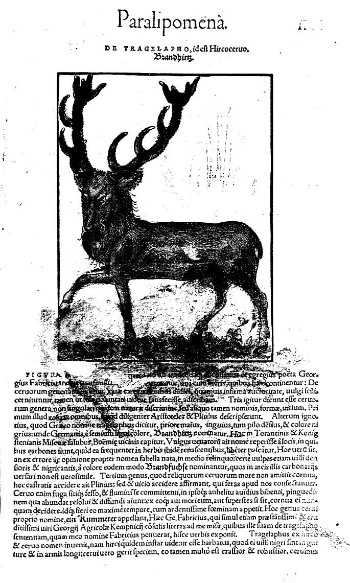 Conradi Gesneri... Historiae animalium lib. I de quadrupedibus viuiparis... - Konrad Gesner - Google Books
