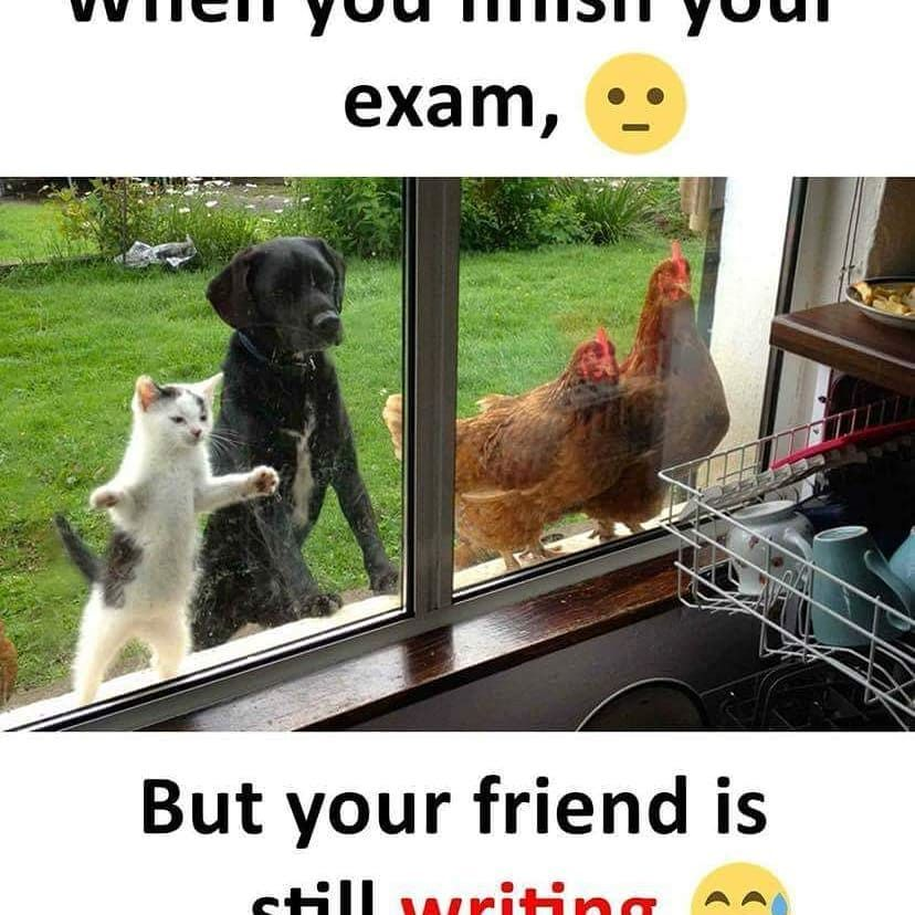 Who Can Relate Tag That Friend Dogs Cat Chicken Unite Dogsofinstagram Goodvi Cute Animals With Funny Captions Funny Cat Memes Cute Jokes