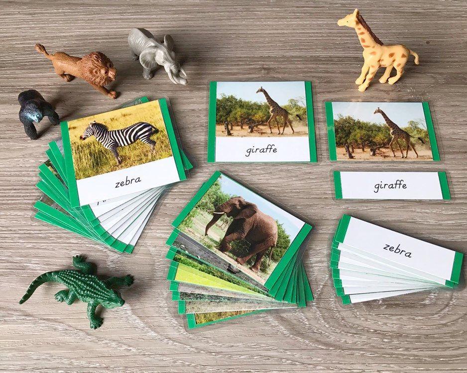 African animals cards 3 part cards montessori language