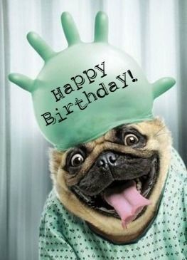 Happy birthday | Birthdays | Happy birthday pug, Happy ... Get Well Soon French Bulldog