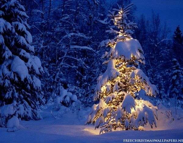 Lonely Christmas Tree Christmas Tree Pictures Christmas Tree Wallpaper Christmas Tree Images