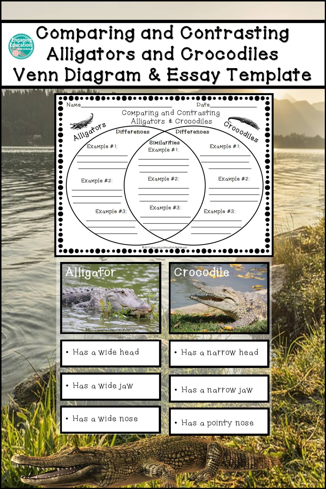 Comparing and contrasting alligators and crocodiles venn alligators and crocodiles students compare and contrast alligators and crocodiles by sorting 9 description cards and completing a venn diagram pooptronica Images