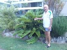 Gumtree sunshine coast qld