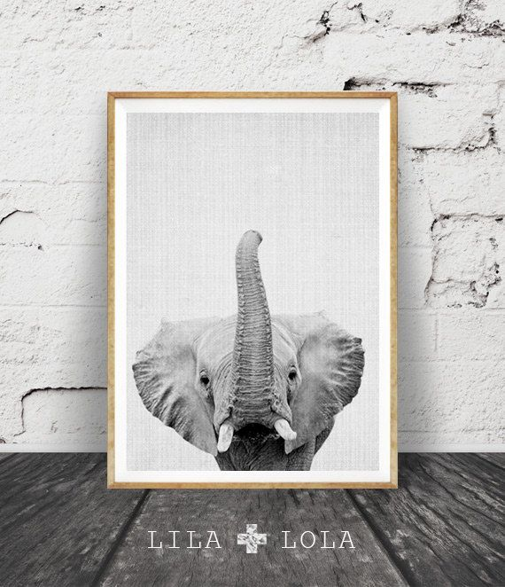 Elephant Print, African Safari Decor, Black and White ...