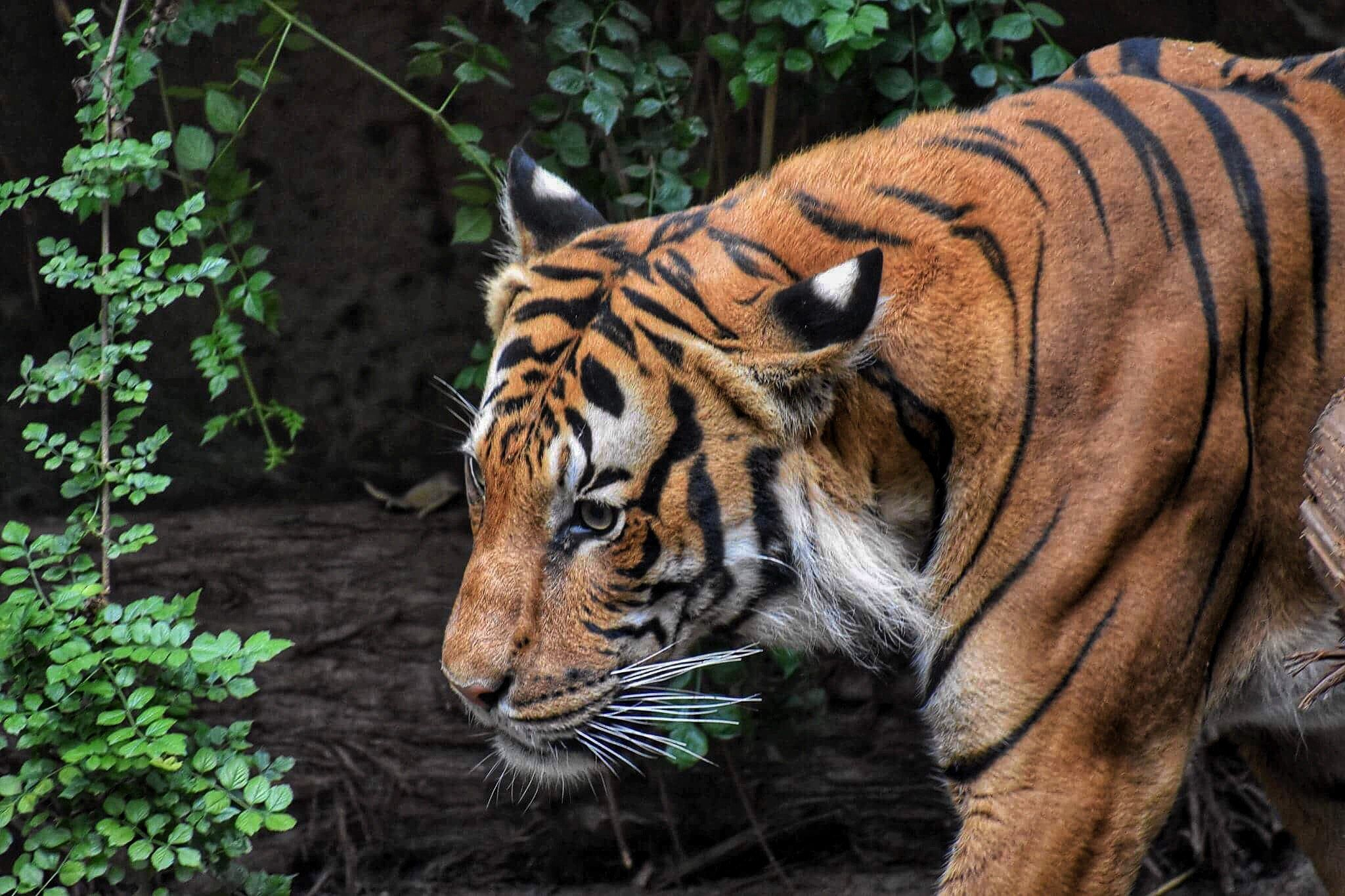 How To Help Endangered Animals in 2020 Cat care, Animal