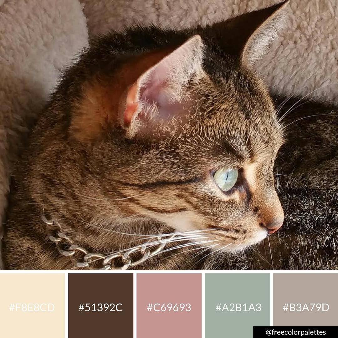 Neapolitan Cat Color Palette Inspiration Digital Art Palette And Brand Color Palette Paint Color Palettes Brand Color Palette Color Stories