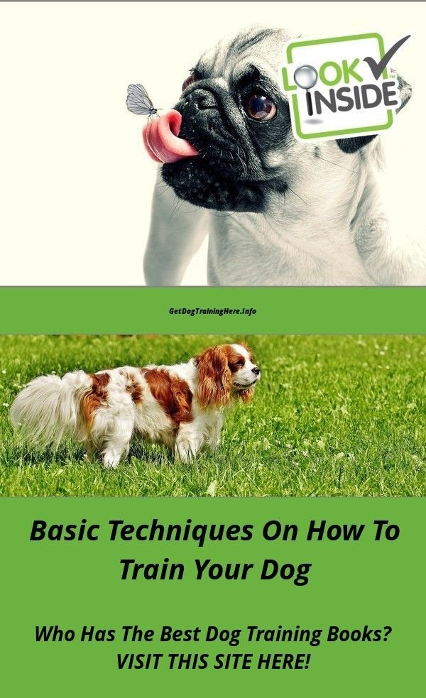 Barking When Left Alone Dog Training Tips You Must See