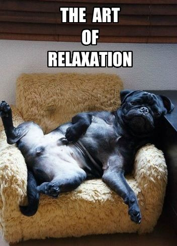 12 Dogs Who Have Perfected The Art of Relaxing | Nettie ...