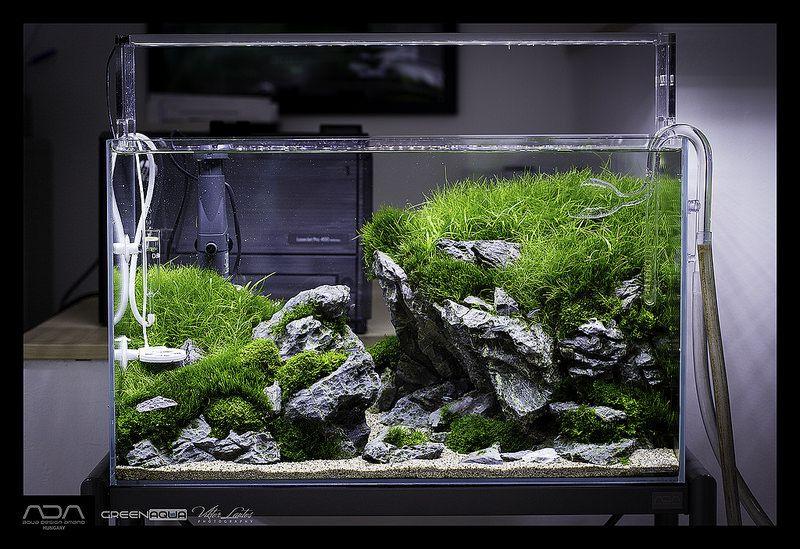 Green Aqua Showroom   Aquascape   Aquarium landscape ...