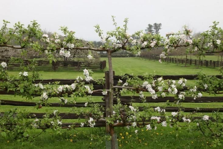 8 Beautiful Garden Gates Worth Walking Through Garden Shrubs