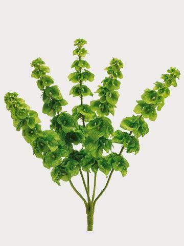 Go green for st patricks day fbb414 21 bells of ireland bush x5 go green for st patricks day fbb414 21 bells of ireland mightylinksfo