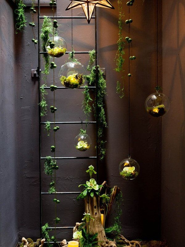 beautiful air plants terrarium hanging garden ideas hanging terrarium ideas balcony decorating