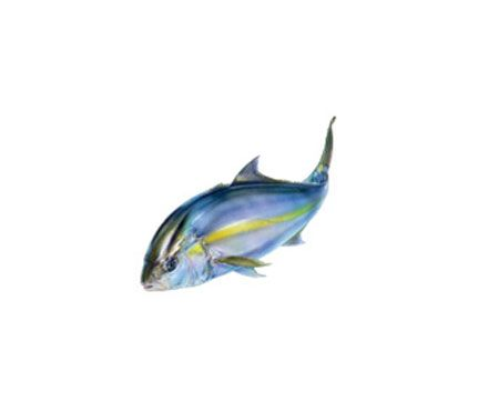 avoid japanese yellow tail Japanese farms put yellowtail, aka amberjack, in polluting net cages and use wild fish as feed.  Instead try: U.S. yellowtail snapper. It's caught with eco-friendly hook-and-line gear in the South Atlantic.