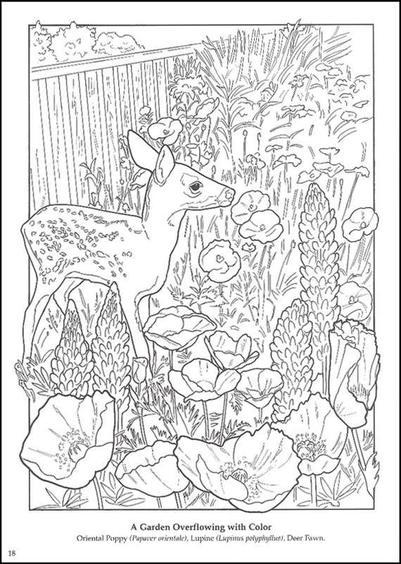 Flower garden coloring book additional photo inside page