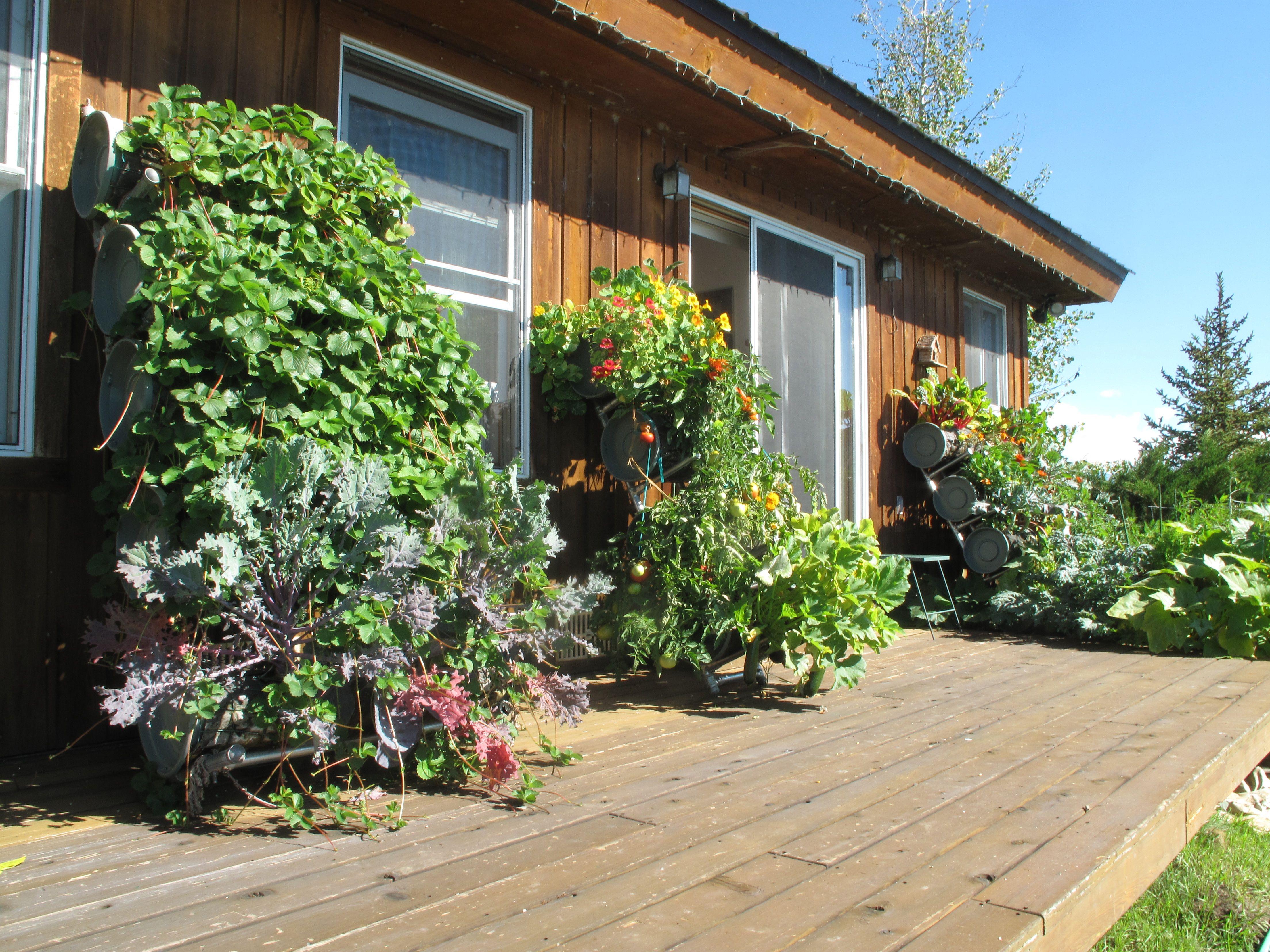 Balcony Budeze™ _ Botanical Bounty on a Budget, shows you ...