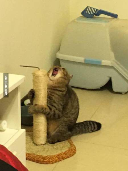 9f551b01d72 When you are a cat and you finally find the best scratch post. - 9GAG