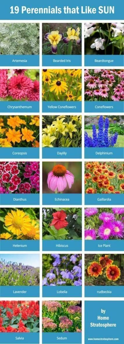 Super Landschaftsbau Ideen Vorgarten voller Sonne Pflanzer 50 Ideen  #Ideen #Lan...#ideen #lan #landschaftsbau #pflanzer #sonne #super #voller #vorgarten
