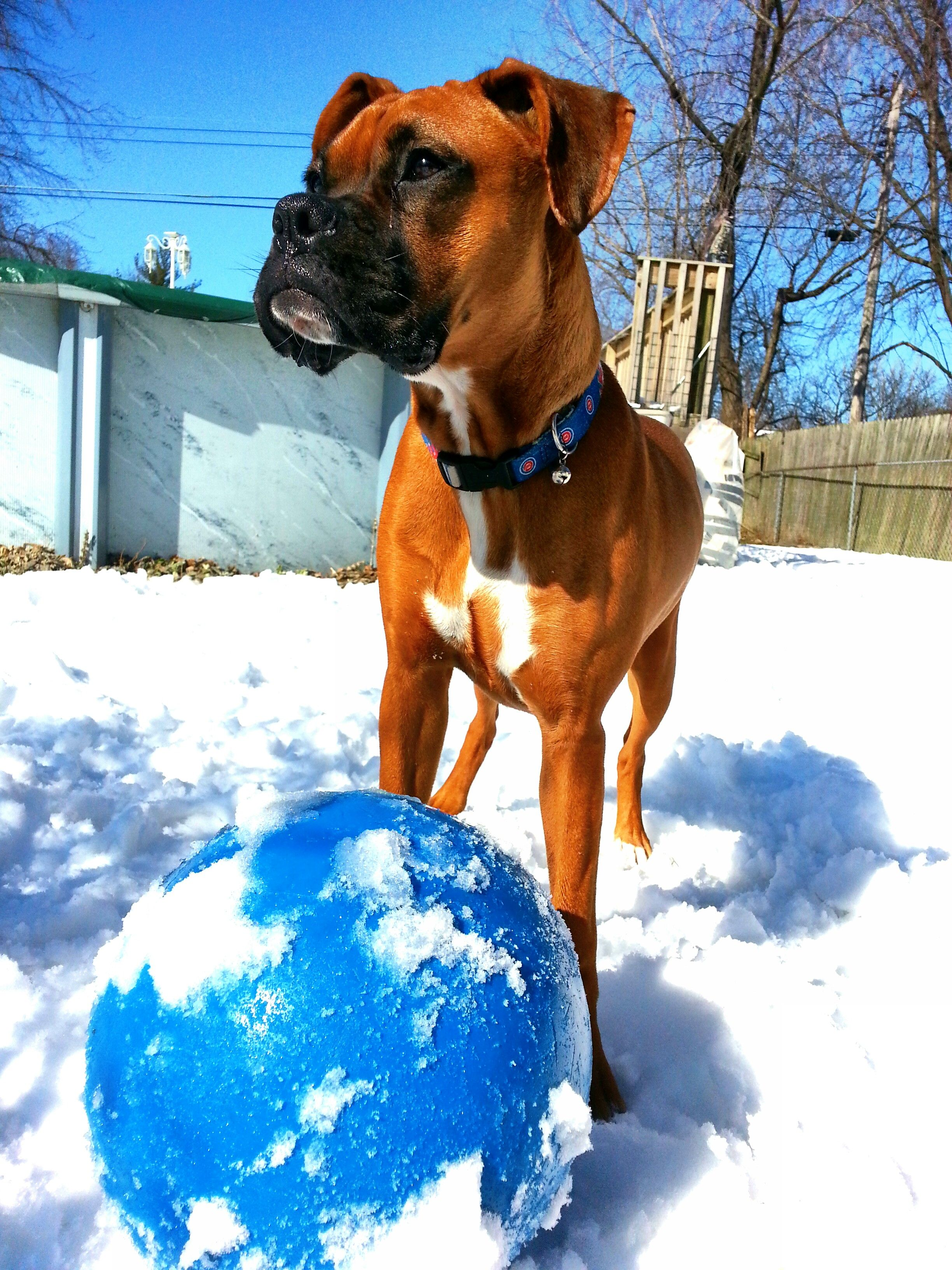 Pretty Penny Pauses For A Picture In The Indiana Snow Luckydog