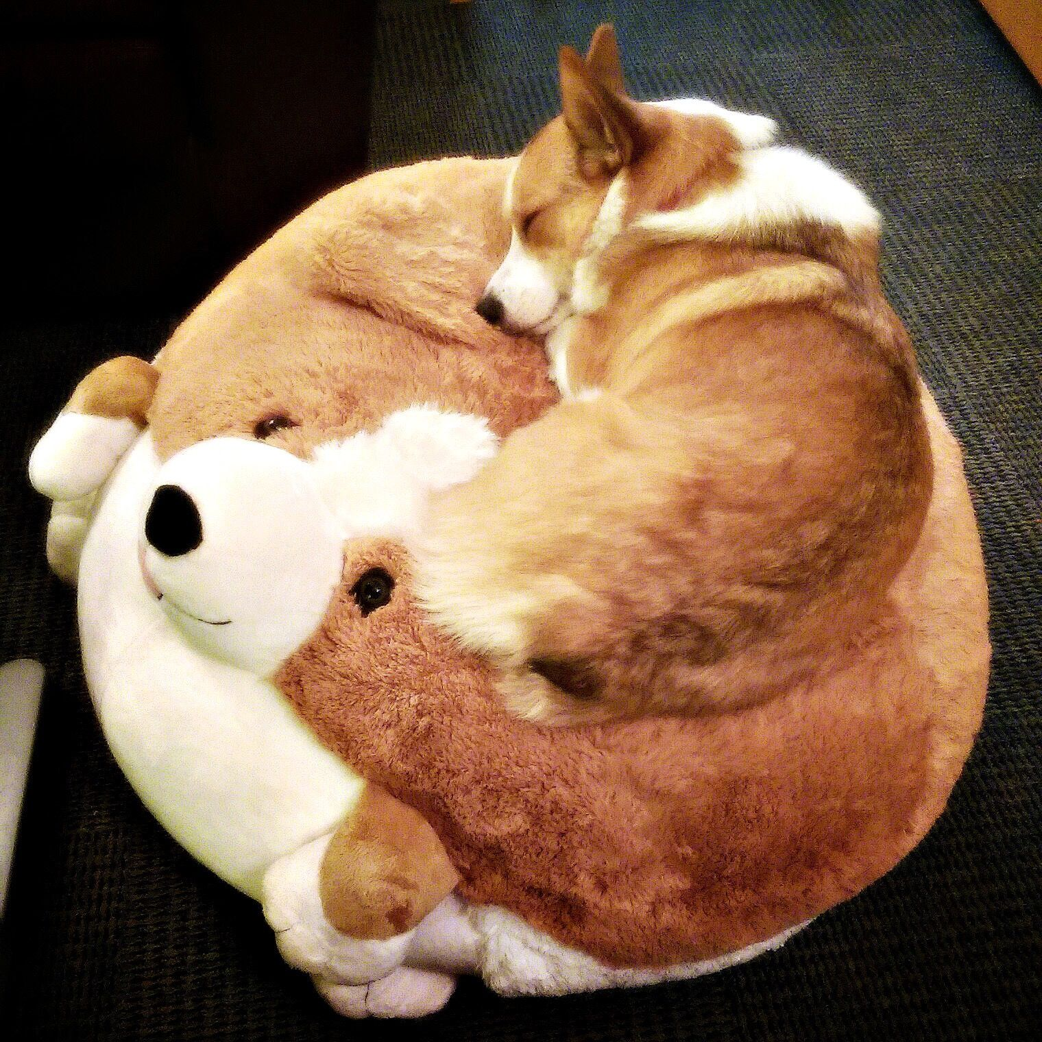Corgi Sleeping On A Corgi Corgi Dog Corgi Cute Animals