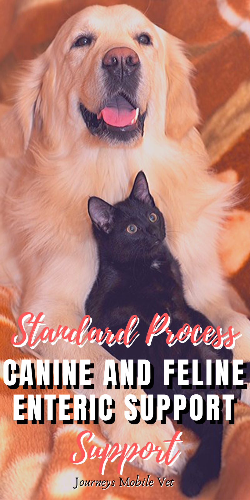 Standard Process Canine and Feline Enteric Support: A Holistic Veterinarian's Therapeutic Review #dog #cat #pet #animals #feline #canine
