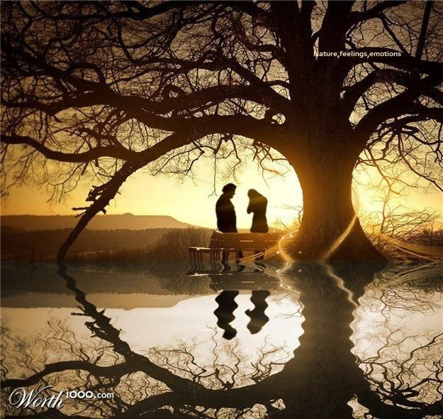 Cool Heart Tree Beautiful Scenery Pictures Scenery Pictures Scenery Wallpaper
