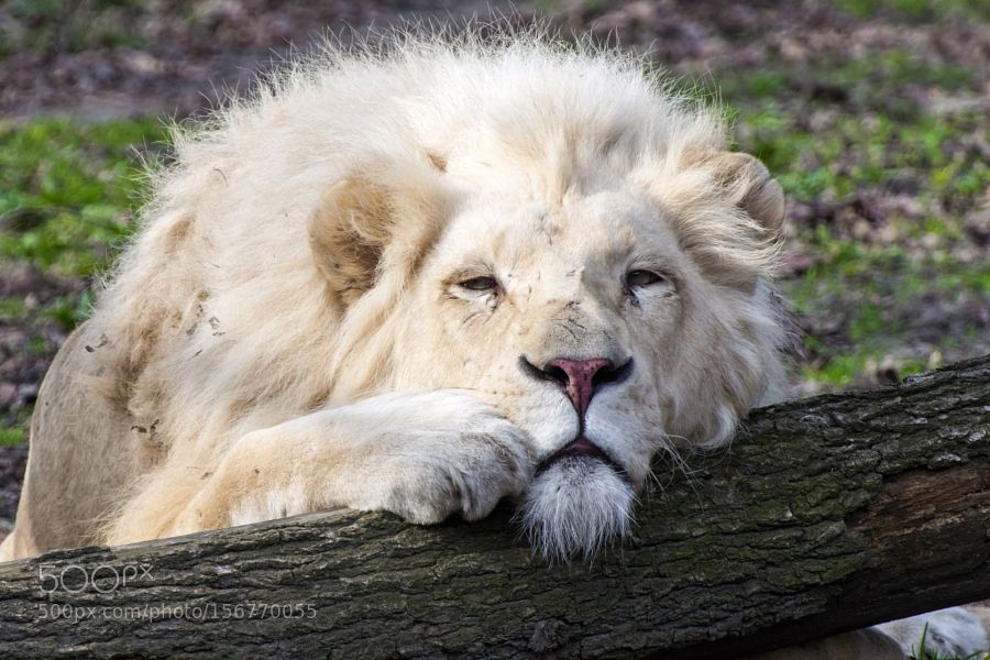 King Rest by belizar via http://ift.tt/1Umx3qR
