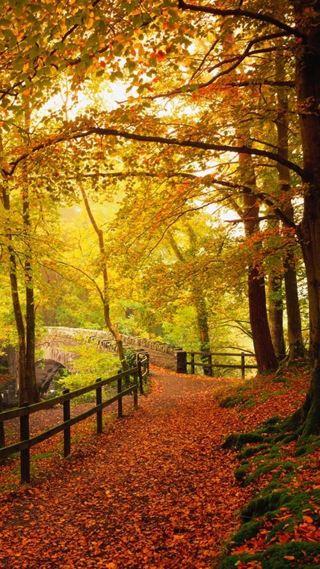 Gold Autumn,beautiful fall colors Nature, Autumn scenes