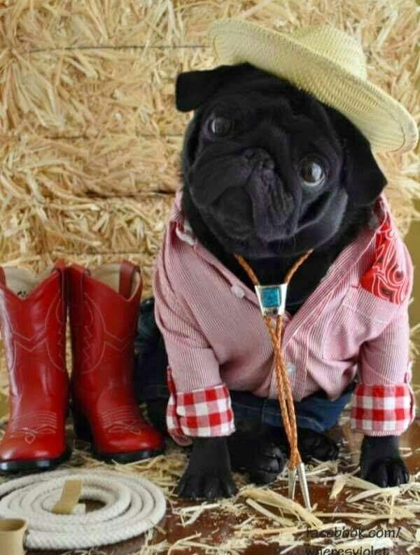 Love A Pug And Come Check Out Pugs For Life Yotube Channel Please